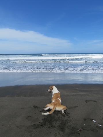 Yuma chilling@ the beach