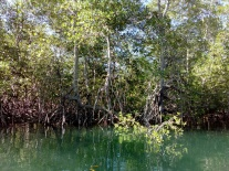 the idyllic mangroves