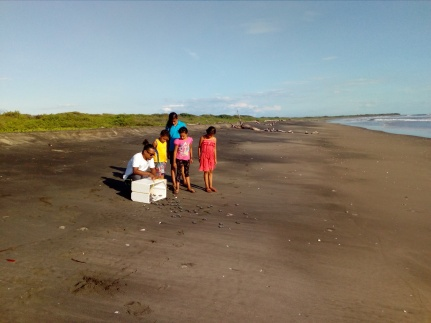Baby turtle release with some local kids