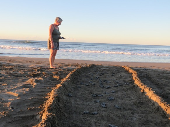 a turtle highway to the sea