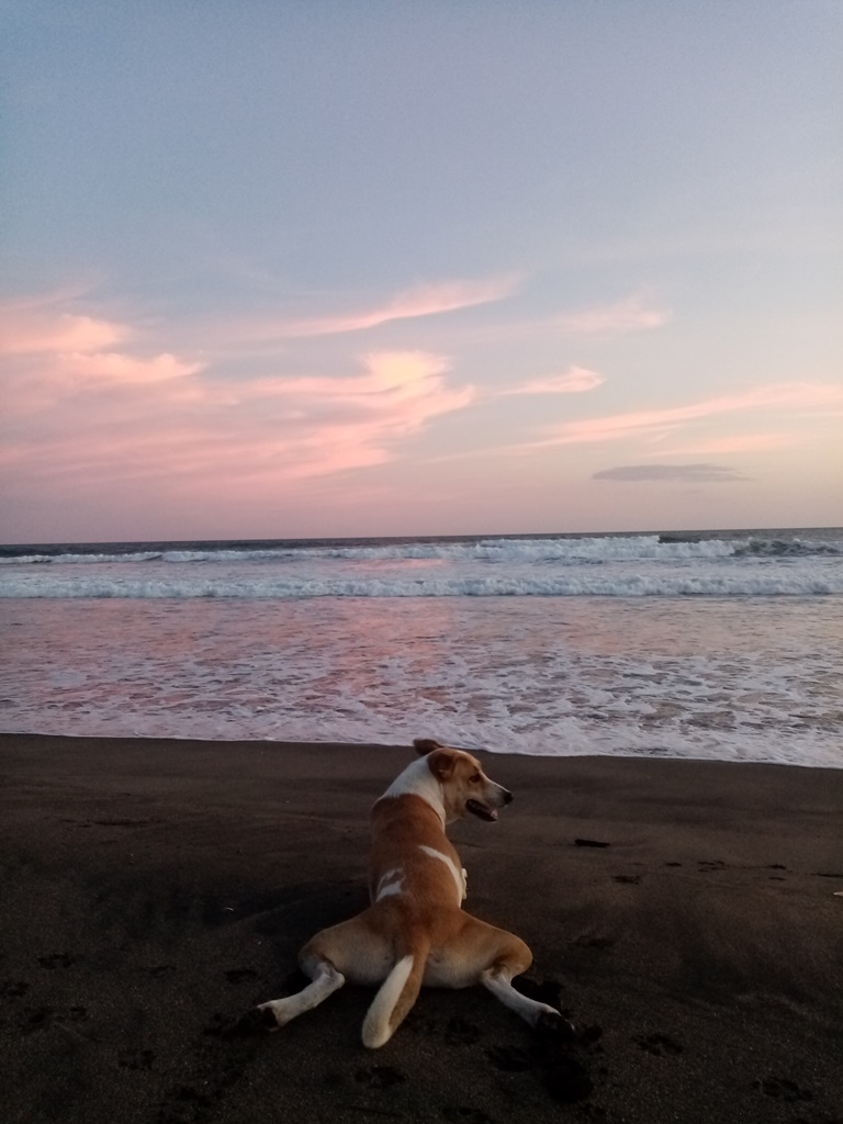 Yuma watching the sunset