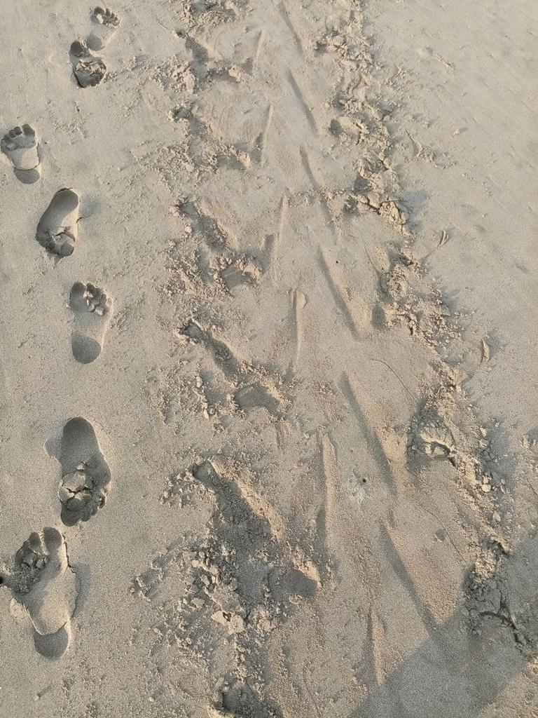 human & turtle tracks