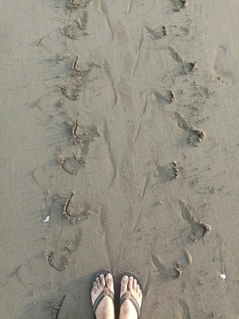 watch out for fresh turtle tracks!