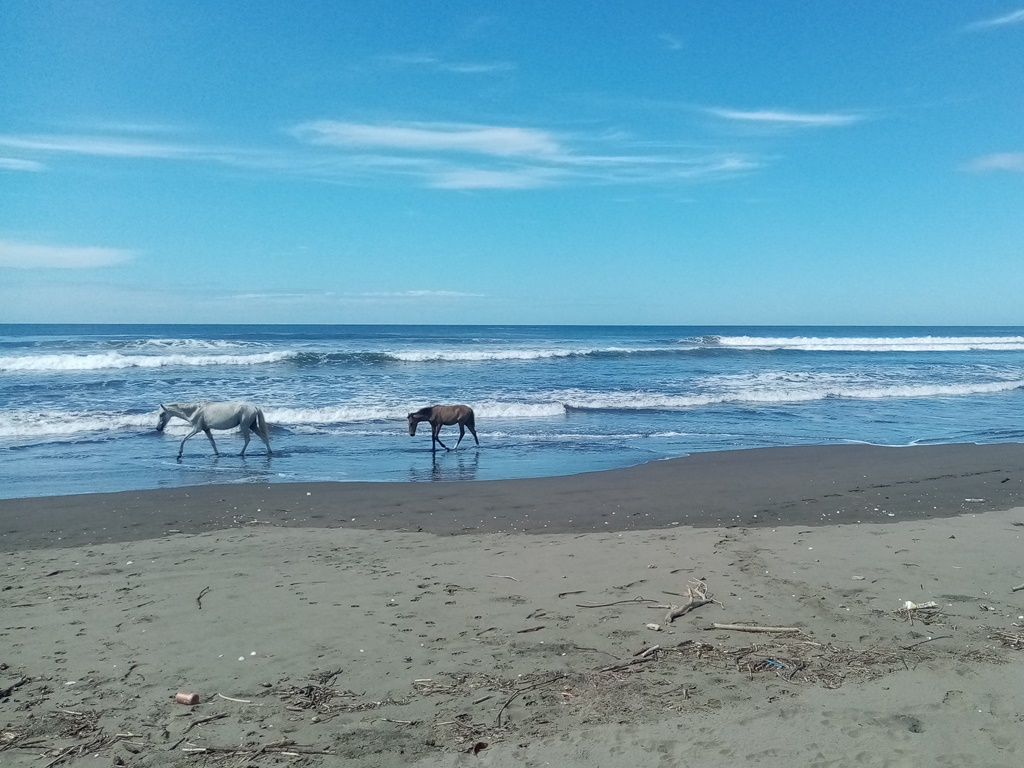 an empty beach just for us and the horses