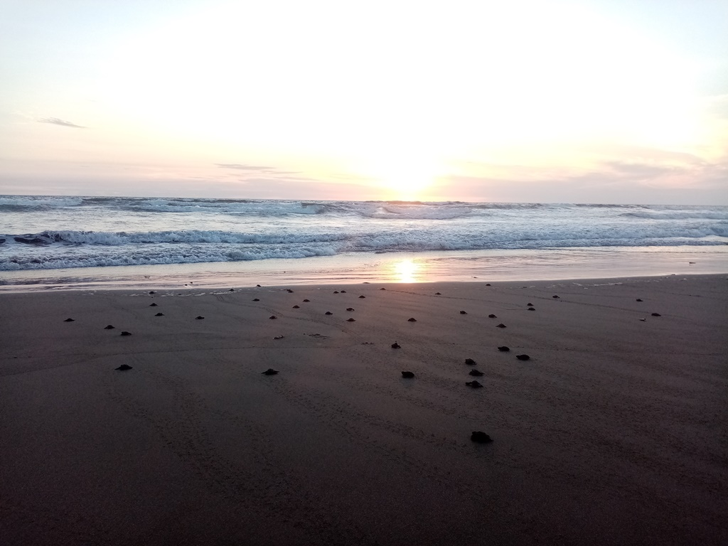 Sunset - perfect with hatchlings!