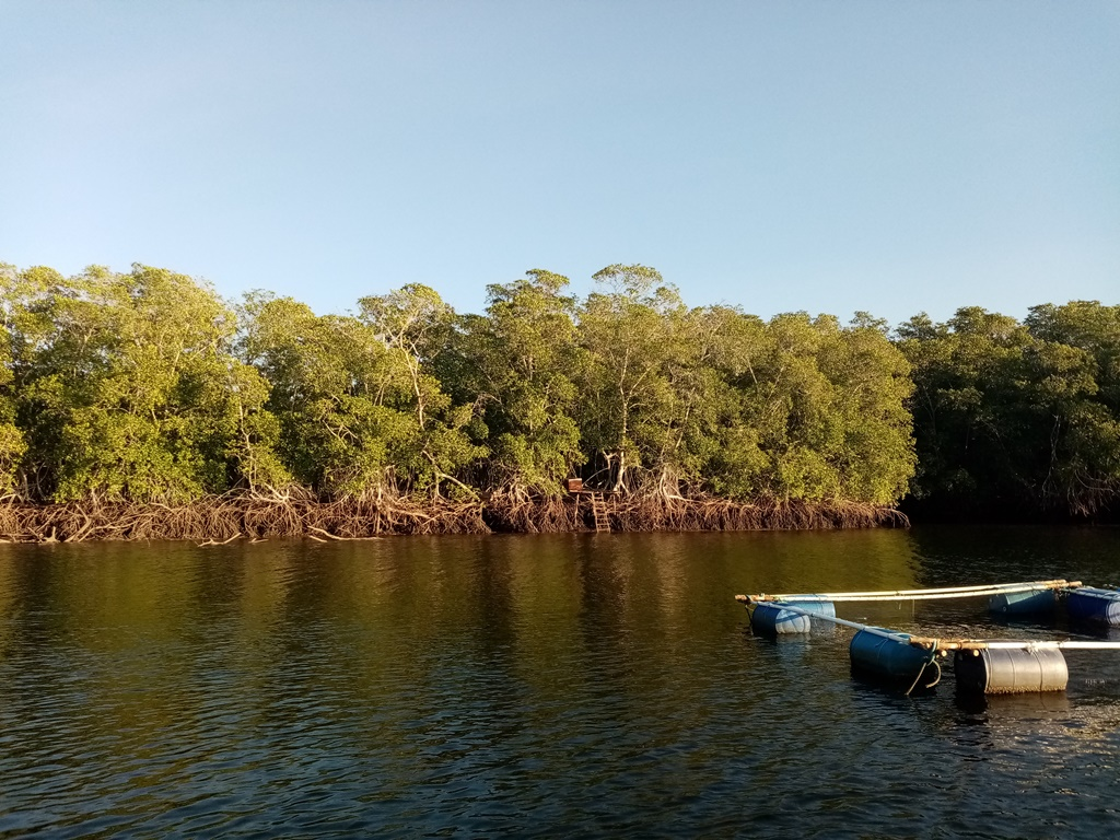 the mangroves exposing their roots during low tide